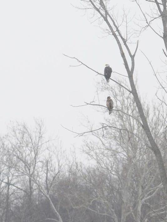 eagles 1.JPG