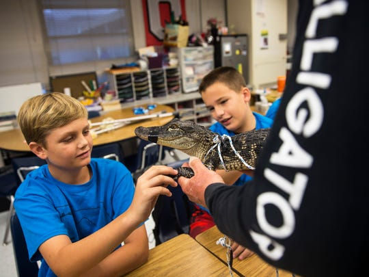 Fourth graders Mason Humphrey, left, and Justin Martin touch Little Jimmy the alligator during a presentation by FWC alligator trapper Ray Simonsen at Laurel Oak Elementary on May 25, 2017.