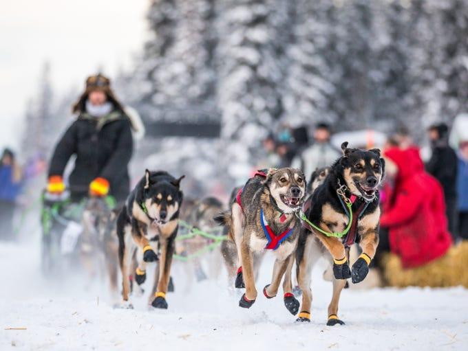 Nicolas Petit mushes his sled dog team during an Iditarod