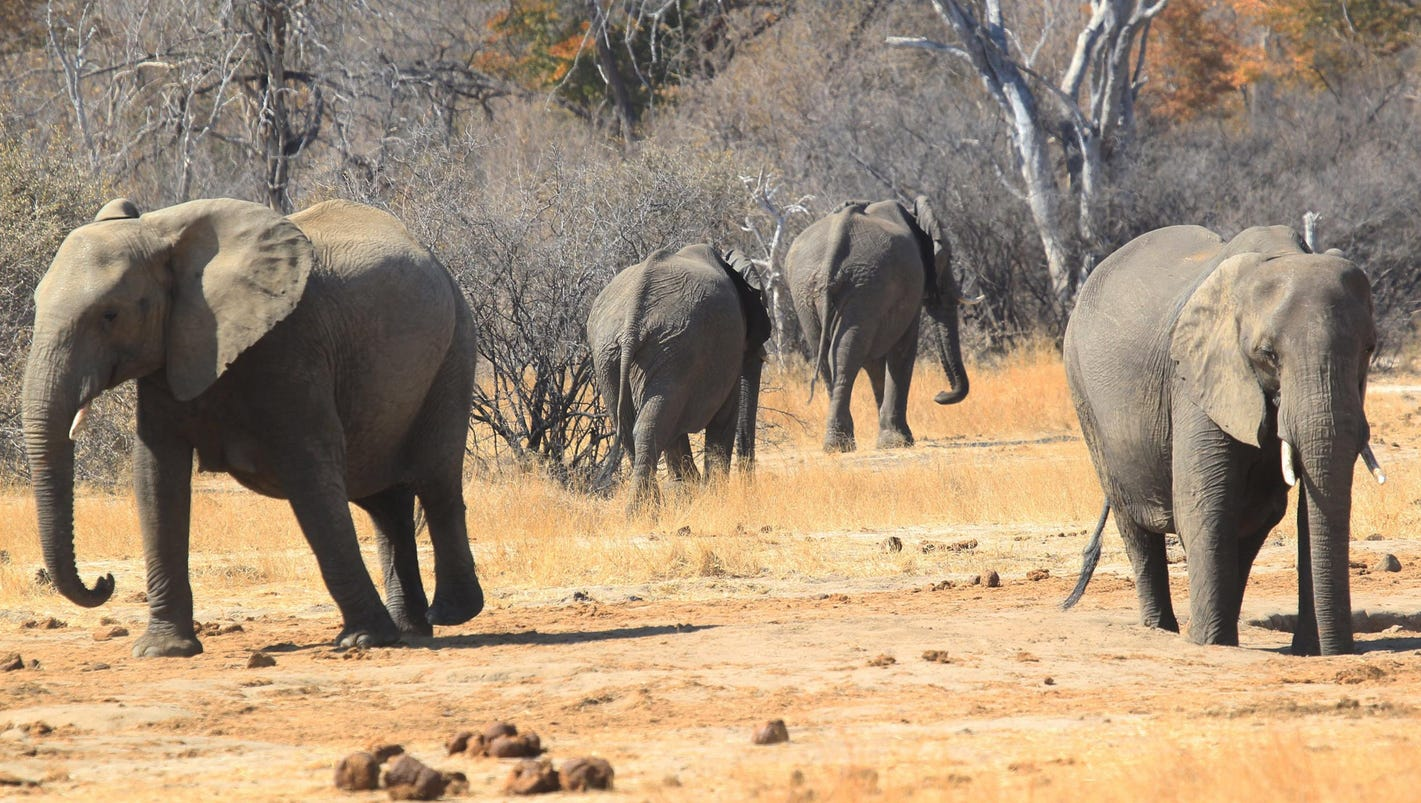 Ban on importation of elephant trophies should stand, Teen Panelist says