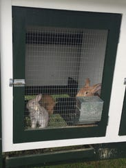The Governor's Mansion bunnies made their debut at