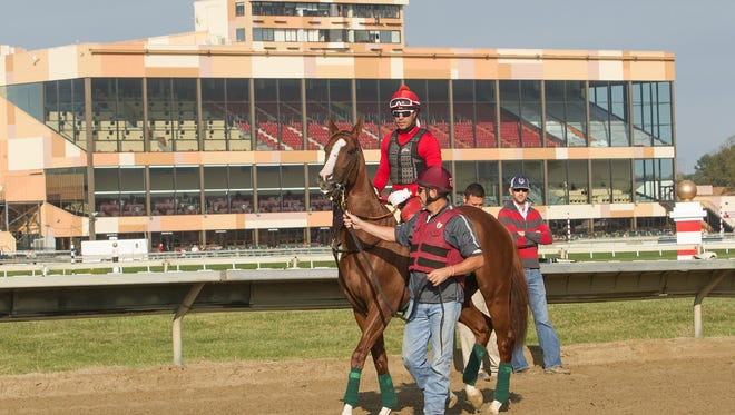 California Chrome prepares to school in the gate Friday morning at Parx Racing.