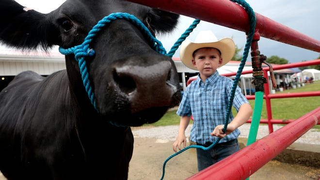 Nine-year-old Jake Justice ties his heifer up so he can wash her before taking her into the barn during the 2014 Hartford Fair.