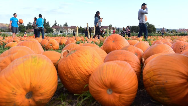 People shop for pumpkins from the pumpkin patch at Cal Poly Pomona in Pomona, Calif., ahead of Halloween on Monday.
