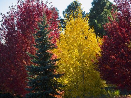 Here S Where To See Arizona S Fall Colors