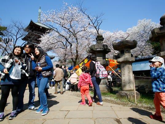 AP JAPAN CHERRY BLOSSOMS I JPN