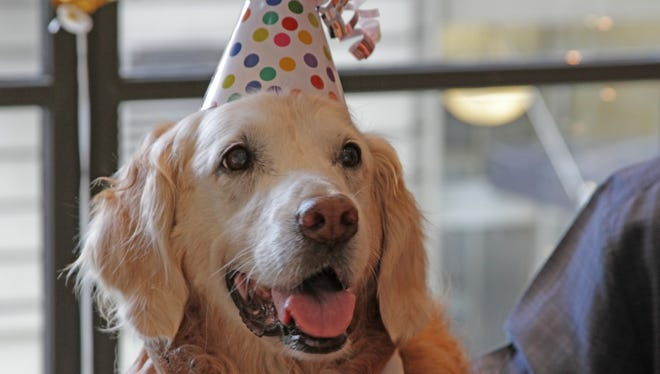 A 16-year-old 9/11 rescue dog recently had a birthday celebration that dog dreams are made of in New York City.