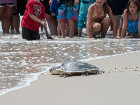 635726541596485075-20150716rm-Sea-Turtles-3