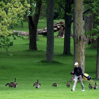 Boys Golf: WIAA Division 1 Greenfield Regional