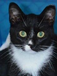 Mickey_cat_adopt_me