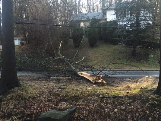 635919843885092236-Tree-down-New-Rochelle.jpg