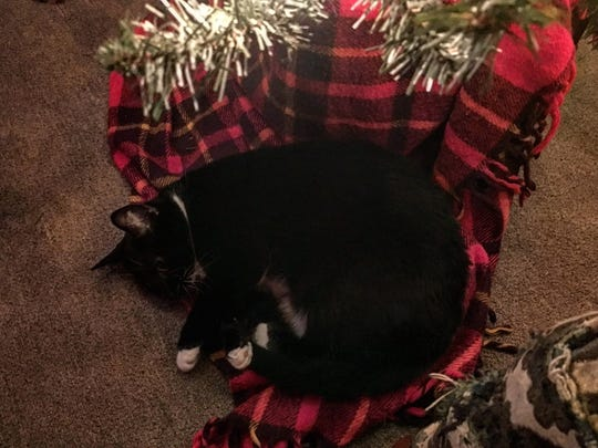 A cat curled up underneath the Christmas tree at reporter