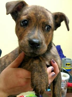 Pet of the day 1007