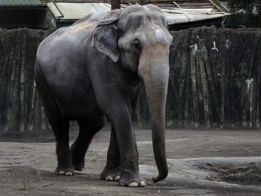 Packy elephant oregon zoo