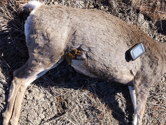Using a GPS device, game wardens marked the location of deer poached in McCone County.