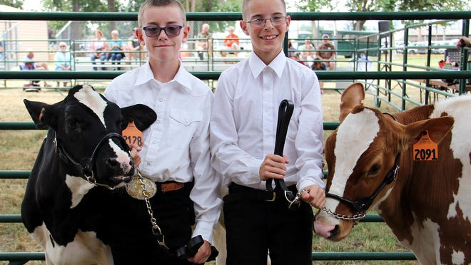 Broden and John get ready to show their calves Smalls, left, and Daisy, right at the Marion County Fair on Friday.