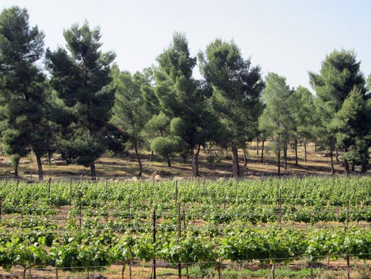 In Israel's Yatir Forest on the edge of the Negev Desert,