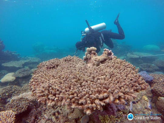Scientists assess coral mortality on Zenith Reef following