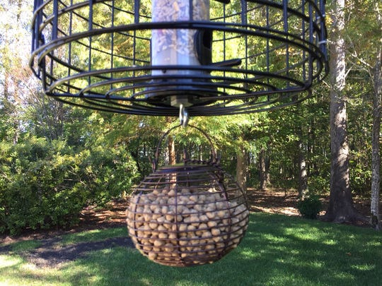A Yard Tuff mulch tree ring makes a neat and easy-keep