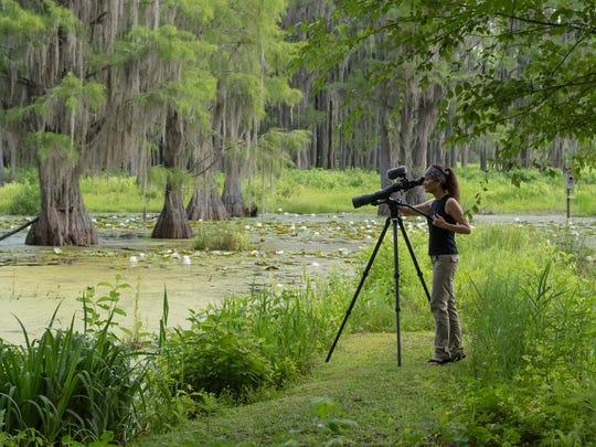 Wildlife photographer Tara Tanaka captures the daily lives of her wild neighbors in their northwest Tallahassee cypress swamp wildlife sanctuary.