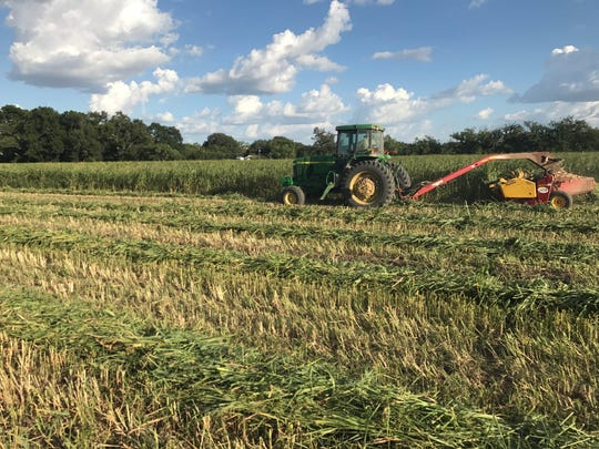 A farmer mows hay in a field near Mertzon in this Standard-Times file photo. According to the most recent crop report from Texas A&M AgriLife Extension Service, producers are reporting better-than-average growing conditions in Texas this season.