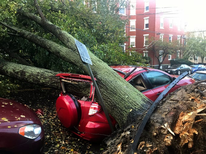 A large tree is down on top of a car on Mellen Street,