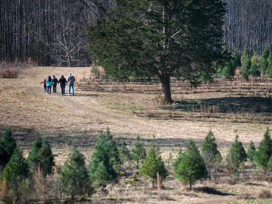 Ward Grove Christmas Tree Farm provides a complimentary mule wagon ride to and from the Christmas tree fields, but families may opt to walk to their destinations.