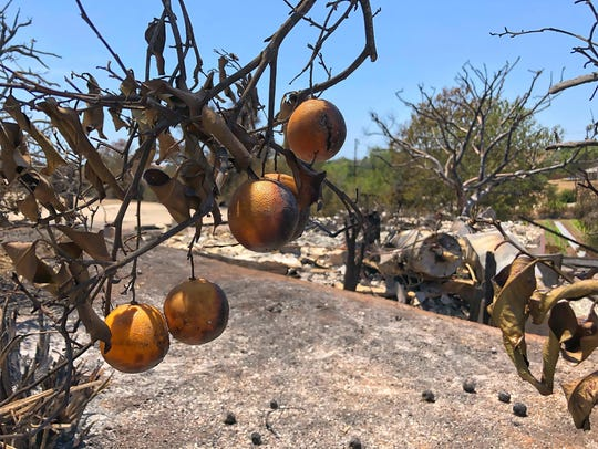 Singed oranges frame the destruction of a home in the