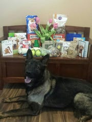 Pako, Springfield Township's K9, is recovering from a gunshot wound he received in the line of duty June 3. In the background are doggie treats from well-wishers. Police say the dog should be ready to return to service