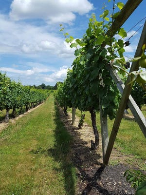 Working Dog Winery  in Robbinsville is just one of the many wineries worth a visit in New Jersey. But if you go, know the rules first.