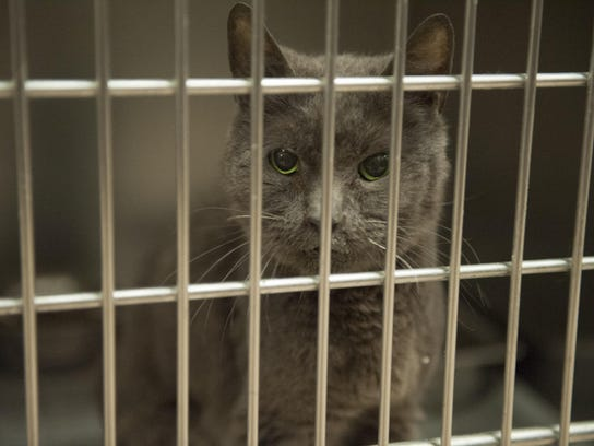 Adopt a cat for free at the Gloucester County Animal
