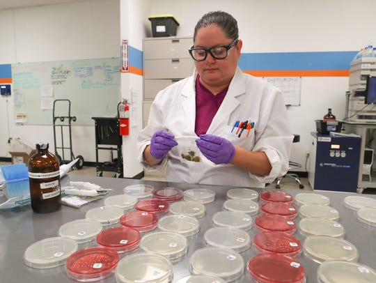 Nicole Hernandez tests marijuana for California compliance