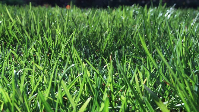 Mid-August to mid-September is the best time to renovate the lawn and plant grass seed.
