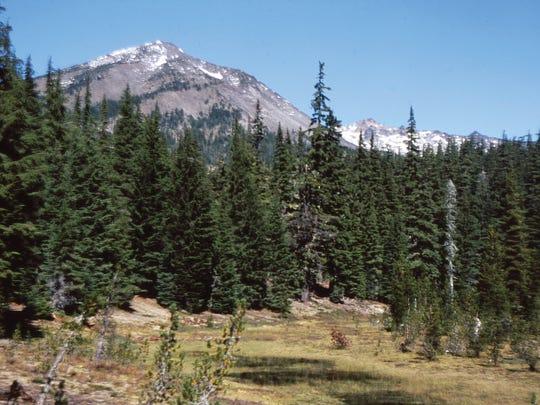Diamond peak looms behind the tree line at Marie Meadow.