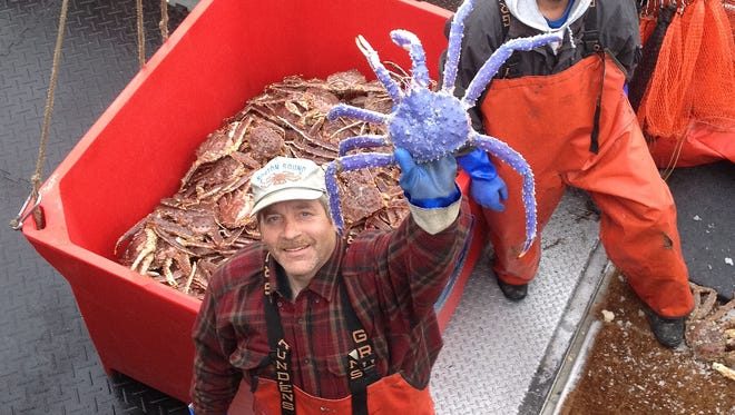 In this photo taken July 4, 2014, and provided by the Alaska Dept. of Fish and Game, crab fisherman Frank McFarland, left, holds up a rare blue-colored red king crab he caught in his commercial crabbing pots as Frank Kavairlook Jr., right, looks on in Nome, Alaska. The blue crab is being kept alive at the Norton Sound Seafood Center until McFarland can have it mounted. The rare colored crab has become a rock star of sorts, with people showing up at the center to have their photos taken with it. (AP Photo/Alaska Dept. of Fish and Game)