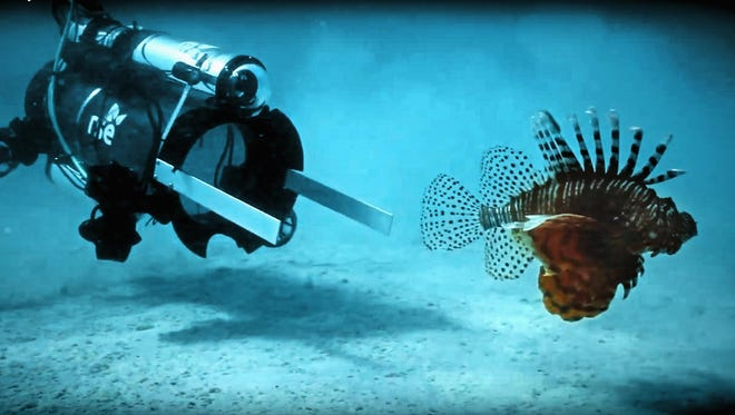 This robot stuns lionfish with an electric current, and then the fish is vacuumed into a container alive. It can later be sold for food. The robot caught 15 lionfish in 48 hours of initial testing.