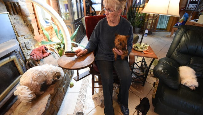 Surrounded by a posse of dogs, Oakland resident and pet rescue operator Gail Ross prepares to groom a small dog. Ross has been running a rescue out of her home for more than a decade.