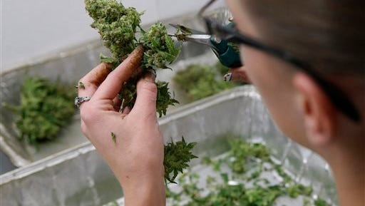 In this Dec. 27, 2013 file photo, an employee trims away unneeded leaves from pot plants, harvesting the plant's buds to be packaged and sold at Medicine Man marijuana dispensary, in Denver. States that have legalized pot are taking a fresh look at making it easier for out-of-state investors to get in the weed business, saying the pot industry's ongoing difficulty banking means they need new options to finance expansion. (AP Photo/Brennan Linsley, file)