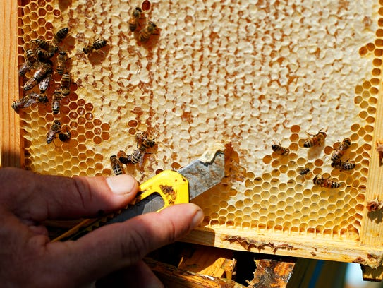 Beekeeper Jeff Maddox peels off wax from a comb with