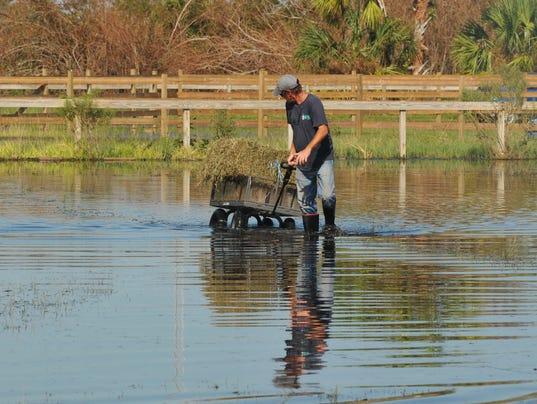 Harmony Farms is flooded