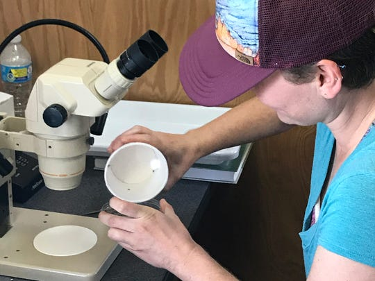Melissa Farquhar, a UW-Madison student, identifies mosquitoes using a microscope near Houston to assist mosquito-control efforts following Hurricane Harvey.