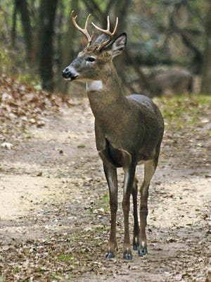 Times columnist Jason Kron notes that chronic wasting disease means some new rules for Central Minnesotans when it comes to hunting and feeding wild deer this year.