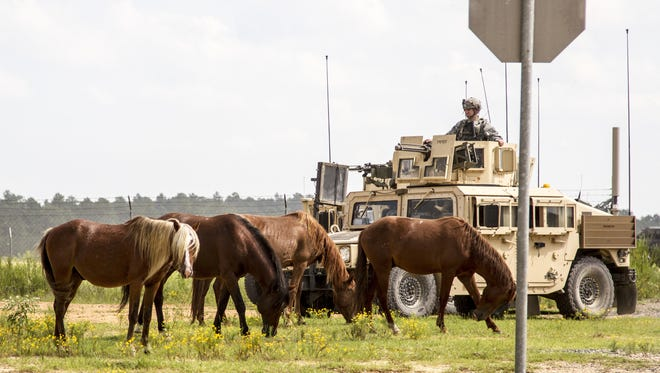 Horses graze near a soldier on security detail at the Joint Readiness Training Center at Fort Polk. A Texas animal welfare group has agreed to partner with the Army to remove the horses and find them homes.