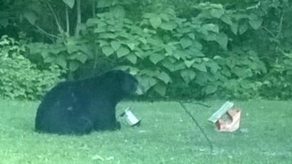 The Indiana Department of Natural Resources says several Northern Indiana residents have reported seeing a black bear rifling through trash cans, upending bird feeders and walking on porches.