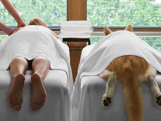 Venus De Fido, a 5-star spa in Palm Desert for K9 pets
