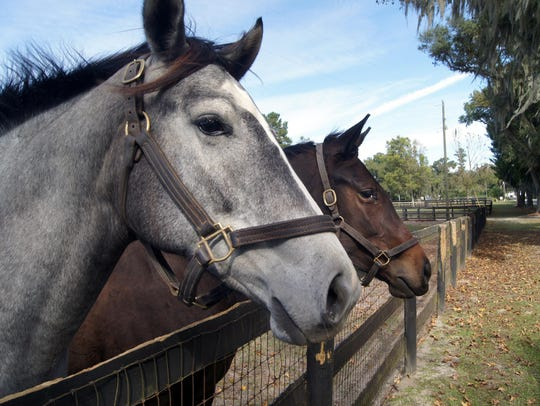 Ocala is considered the epicenter of Florida's equestrian