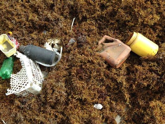 Seaweed lines the beach 23.jpg