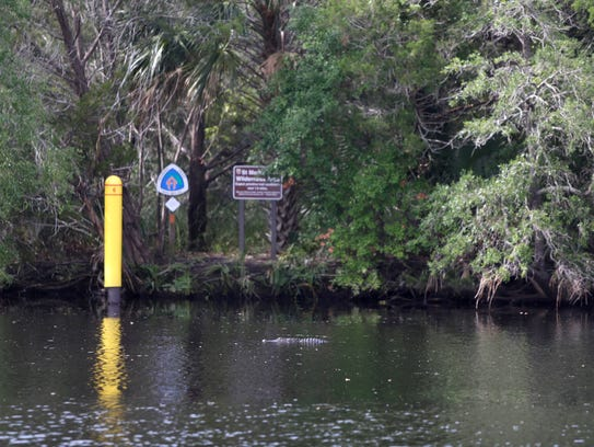 An alligator floats in front of a marker on the Florida