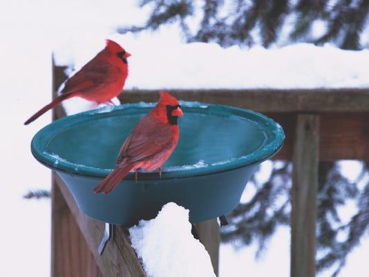 636467748880636933-winter-heated-birdbath.jpg