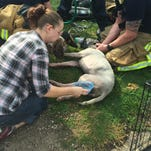Speckles (standing) checks on Star. Both dogs were treated by medics after being rescued from a house fire on Curtis Avenue Wednesday morning.